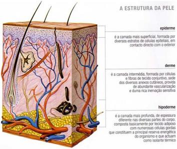 Estrutura da pele