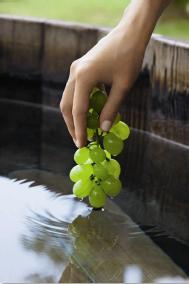 Tratamento uva